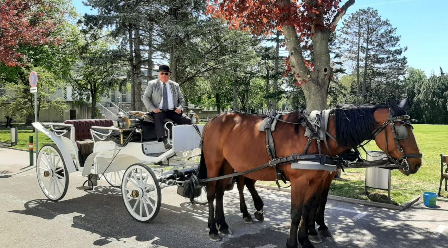 5 Questions To: Carriage Company Frank Wulf